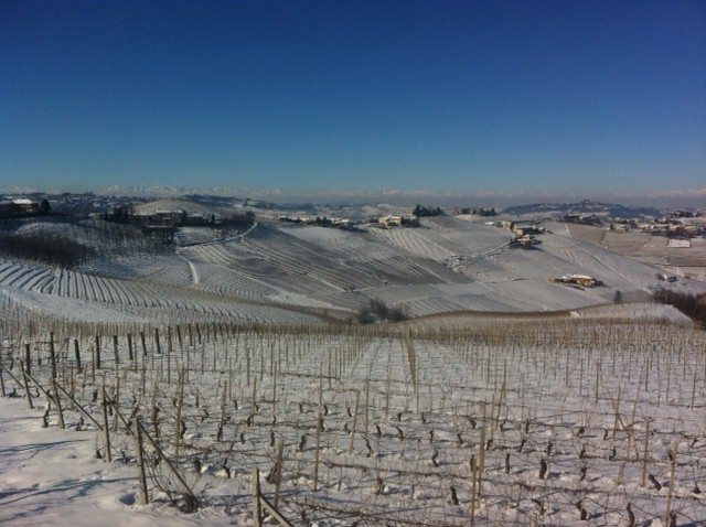 Snowy vineyards in Piedmonte