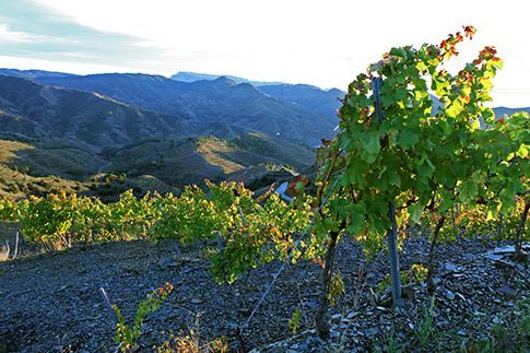 Marco-Abella---Vineyards---Schist