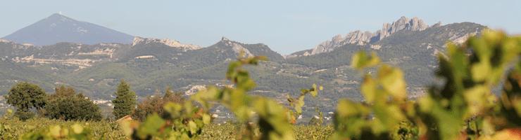 Les Dentelles de Montmirail - Lea and Sandeman - Domaine Romain Roche