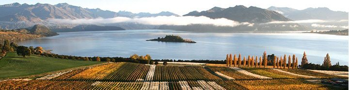 Rippon-Valley-Sauvignon-Blanc-Vineyards-South-Island-New-Zealand-view
