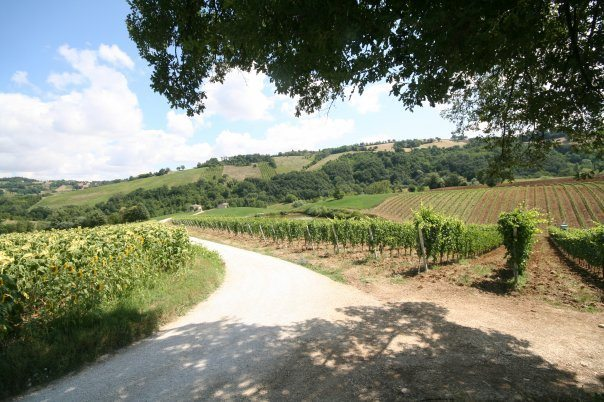Andrea Felici-Azienda Agricola Biologica-Lea and Sandeman-Wine Merchants-Vineyards