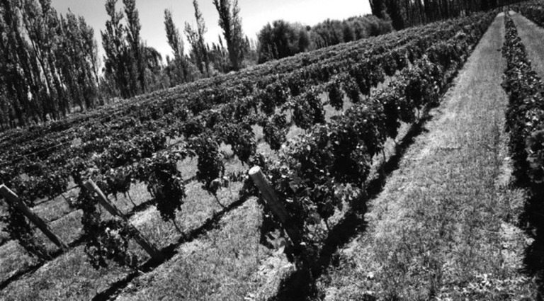 Bodegas Chacra - Patagonia- Estate Vineyard