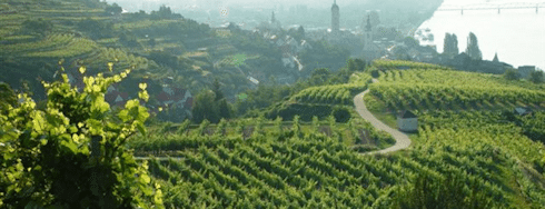 Kremstal vineyards