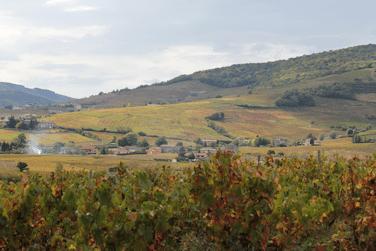 Domaine Rochette - Beaujolais