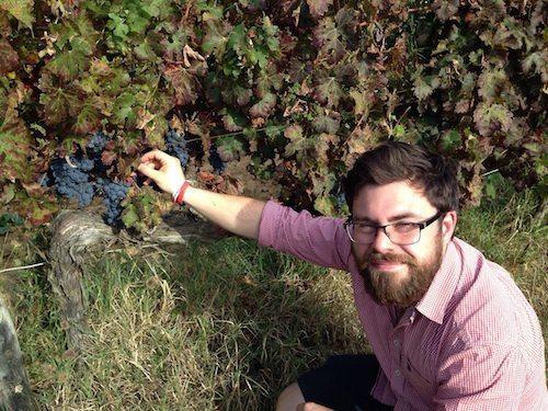 Angus Barcroft - Lupicaia Vineyards