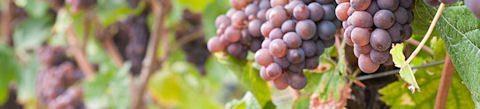 Braunewell Pinot Noir