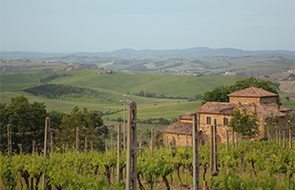 New-Tuscany-Wine-Releases
