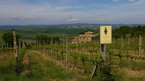 The beautiful Fuligni Vineyard