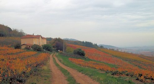 Domaine Laurent Martray perched on the slopes of Combiaty