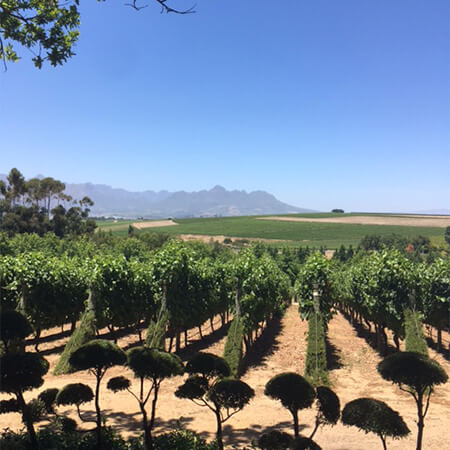 South Africa New Generation Winemarkers