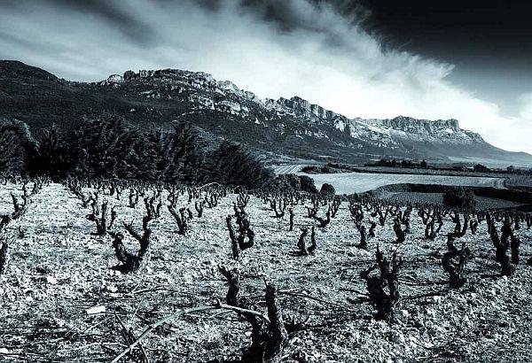Artuke Vines