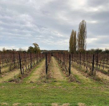 Herbert Hall Vineyards Kent