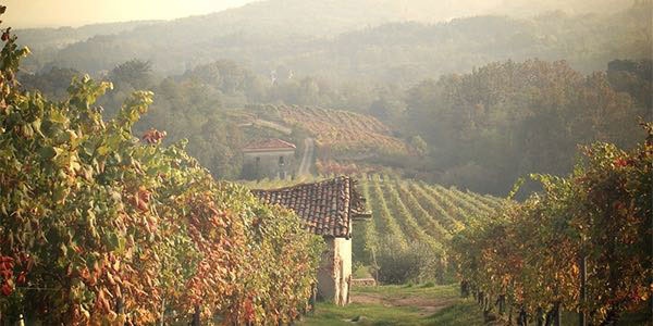 Le-Piane-Boca-vineyards-Piedmont