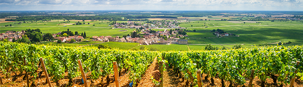 Burgundy-Vintage-Report