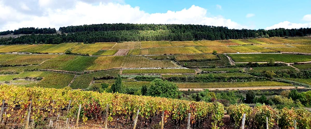 Burgundy vineyard landscape