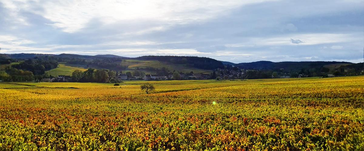 Burgundy Banner landscape