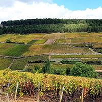 2019 Burgundy EP part 1