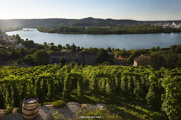 Bott vineyard
