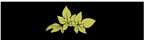 vine leaves bordeaux primeur