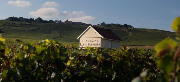 Roederer vineyard