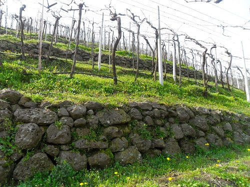 Battistelle's-Vineyards-Terracing