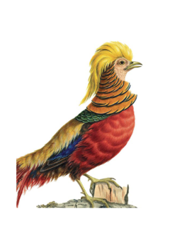 CARDS - GOLDEN PHEASANT Archivist Gallery, Lea & Sandeman