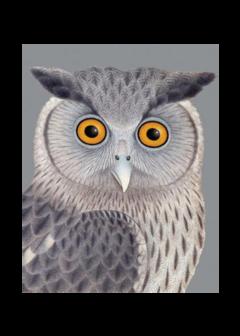 CARDS - SILVER OWL Archivist Gallery, Lea & Sandeman